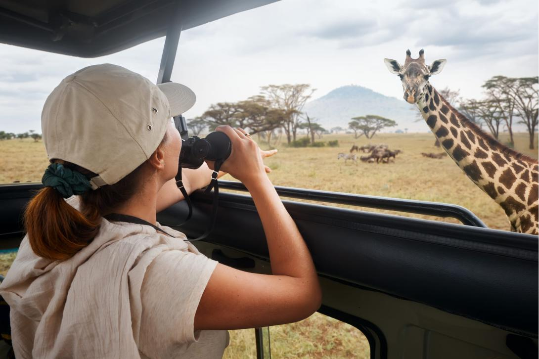 A student on a safari tour looking right at a giraffe while it stares back at her.